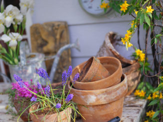 Flowers and Flower Pots